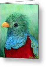 Quetzal Eye'n You Greeting Card