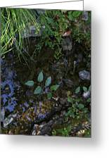 Quiet Brook In The Mountains Greeting Card