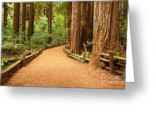 Quiet Forest Greeting Card
