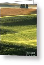 Quiet Morning In The Palouse  Greeting Card by Sandra Bronstein