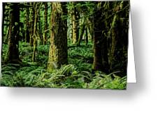 Quinault Rainforest Greeting Card