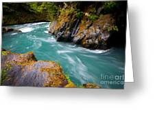 Quinault River Bend Greeting Card