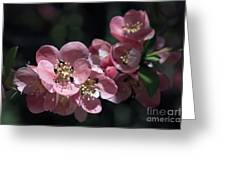 Quince 5160 Greeting Card