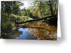 Quinnebaug Reflections  Greeting Card