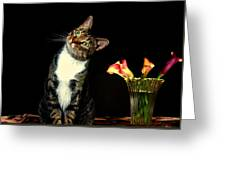 Quizzical Cat Greeting Card