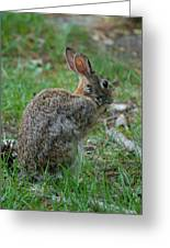 Rabbit 287 Greeting Card