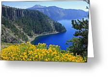 D2m5622-rabbit Brush At Crater Lake Greeting Card
