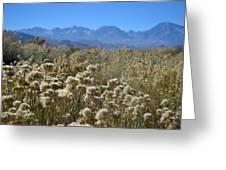 Rabbit Brush Owens Valley Greeting Card