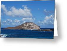 Rabbit  Head Hawaii Greeting Card