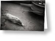 Rabbit Strip Fly Greeting Card