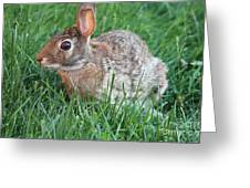 Rabbit On The Run Greeting Card