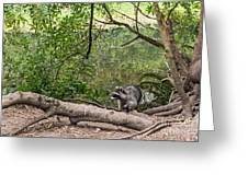 Raccoon At The Lake Greeting Card