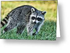 Raccoon Buddy Greeting Card