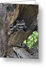 Raccoon Family Time Greeting Card