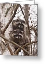 Raccoon Siblings Greeting Card