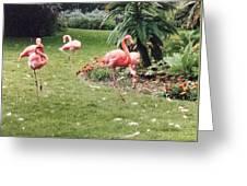 Racing Flamingos Greeting Card