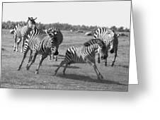 Racing Zebras 1 Greeting Card