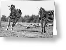 Racing Zebras Greeting Card
