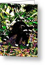 Racoon At Faver-dykes Park Greeting Card