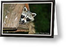 Racoon Greeting Card