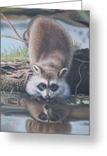 Racoon Reflections Greeting Card