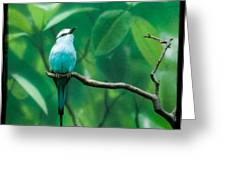 Racquet Tailed Roller Greeting Card