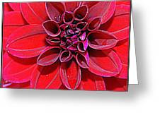 Radiant In Red - Dahlia Greeting Card