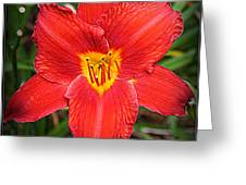 Radiant In Red - Daylily Greeting Card