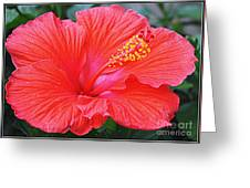Radiant In Red Greeting Card