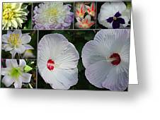 Radiant In White Greeting Card
