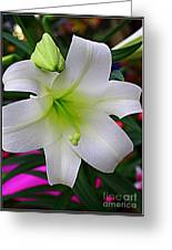 Radiant In White - Lily Greeting Card