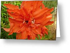 Radiant Lily Greeting Card by Gregory Young