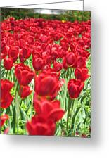 Radiant Red Greeting Card