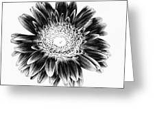 Radiant Solarized Greeting Card