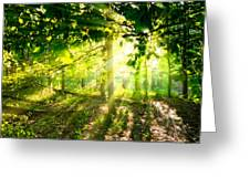 Radiant Sunlight Through The Trees Greeting Card