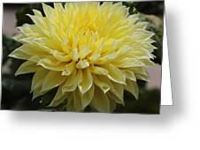 Radiant Yellow Dahlia Greeting Card