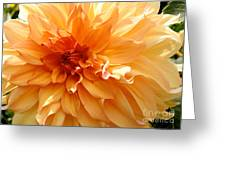 Radiating Orange Dahlia Greeting Card