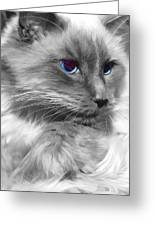 Ragdoll In Black And White Greeting Card