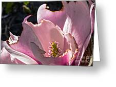 Ragged Magnolia Greeting Card