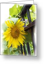 Railed Sunflower Greeting Card