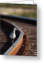 Railroaded Willet  Greeting Card