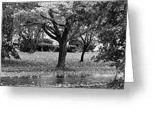 Rain And Leaf Ave In Black And White Greeting Card