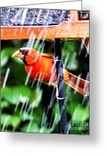 Rain Bird Greeting Card