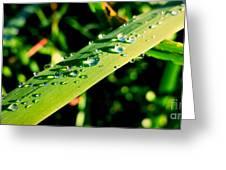 Rain Blade Greeting Card