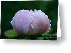Rain Comes Softly Greeting Card