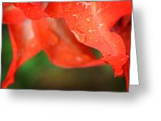 Rain Dance - Red Flower Photography By Sharon Cummings Greeting Card