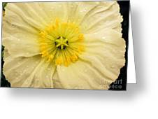 Rain Drenched Yellow Poppy Greeting Card