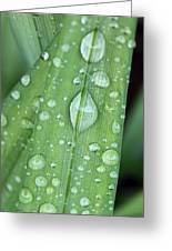 Rain Drops Greeting Card