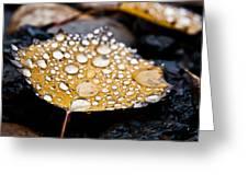 Rain Drops On Autumn Birch Leaf Greeting Card