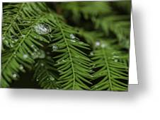 Rain Drops On Cypress Greeting Card
